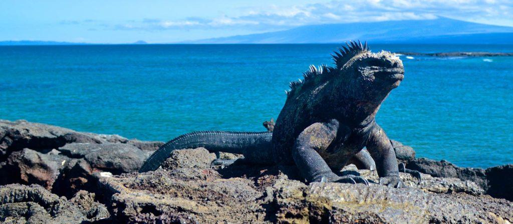 Ecuador presenta propuesta para Fondo Verde en Galápagos