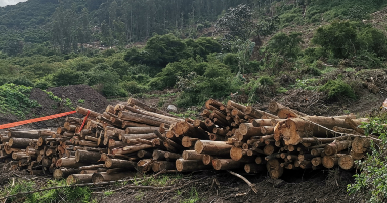 La tala en el volcán Ilaló deja desperdicios madereros.
