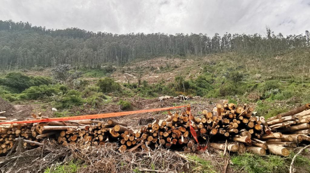 El Ilaló sufre problemas más graves que la tala de árboles