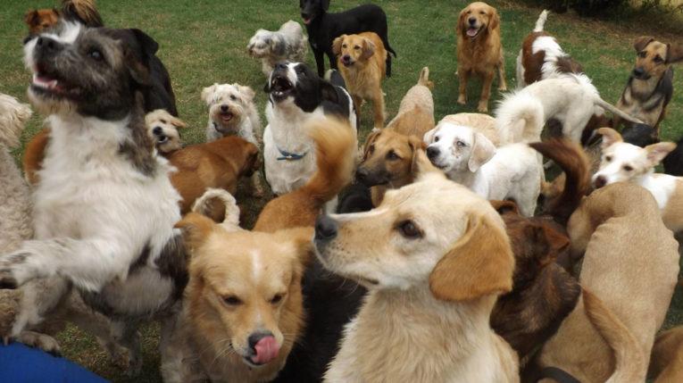 Los refugios para perros y gatos abandonados o rescatados se mantienen de forma autosustentable