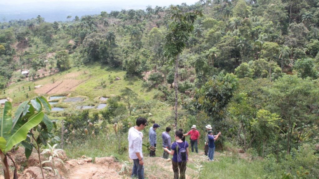 """Los árboles """"aprenden"""" a adaptarse al cambio climático, dice investigación internacional"""