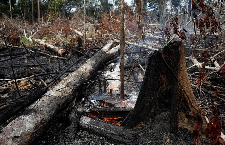 Imagen de la devastación causada por el incendio forestal en la zona de Novo Airao, muy cerca del Parque Nacional  de Anavilhanas.