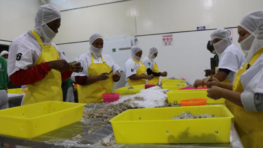Ecuador investiga origen de coronavirus en cajas de camarón