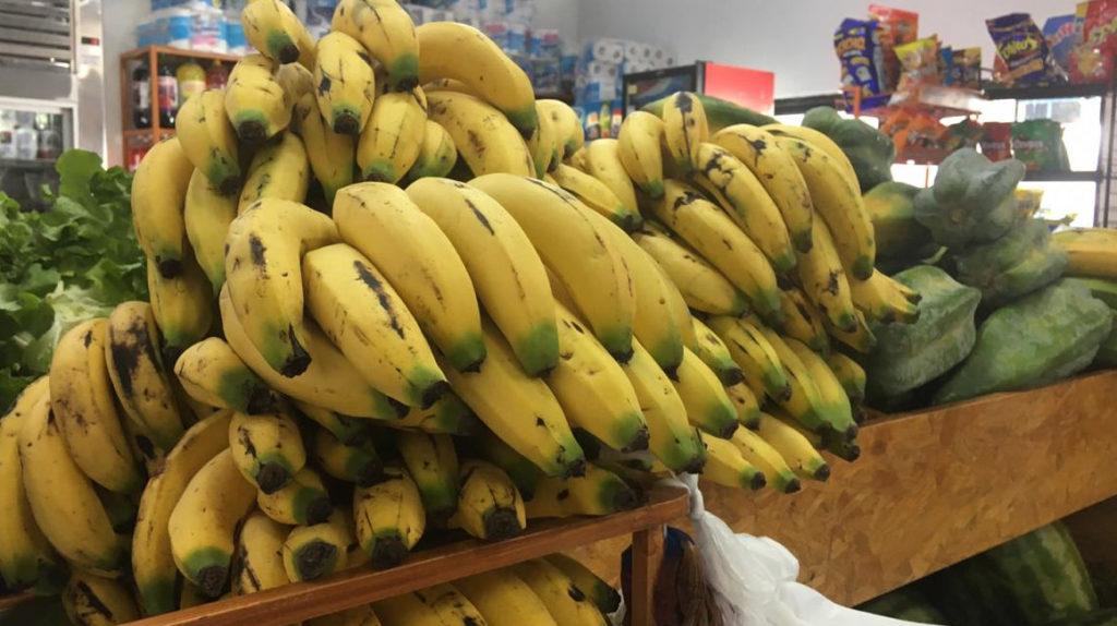 Ecuador, principal exportador de banano Cavendish, amenazado por hongo Fusarium 4