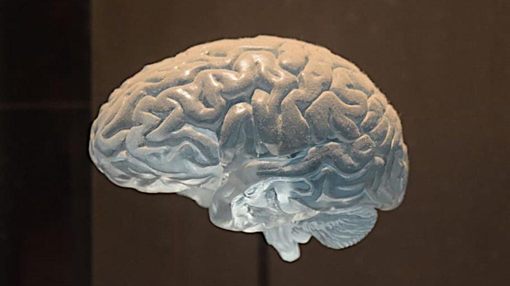 Una empresa rusa ofrece un camino a la inmortalidad: cerebros congelados