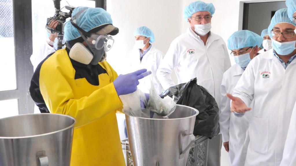 Ecuatorianos producirán aguacate en Colombia y exportarán chocho