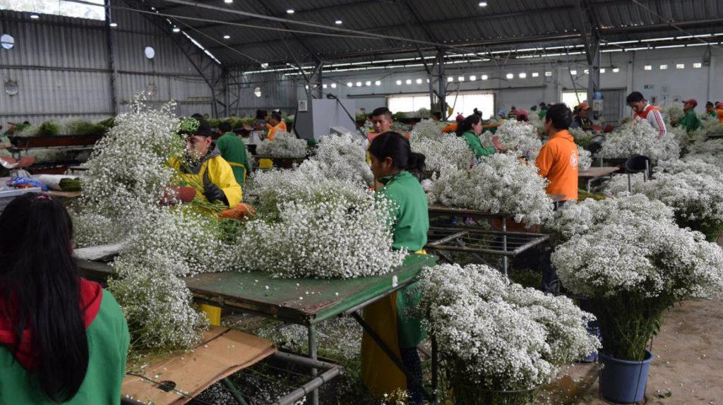 Florícolas piden licencia de 90 días para evitar despidos