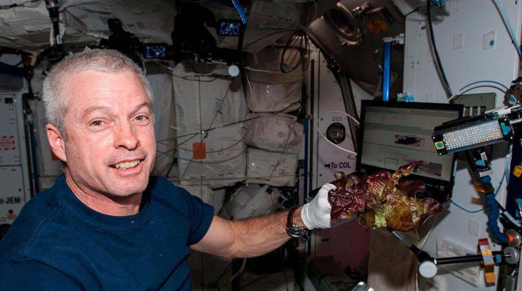 NASA cultiva lechugas sin microbios y seguras para consumo