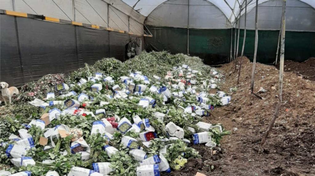 En menos de un año el sector florícola ha perdido USD 80 millones