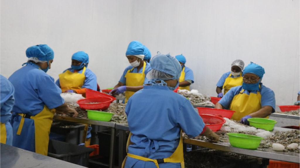 Optimistas, pesqueros y camaroneros trabajan sin parar en plena crisis