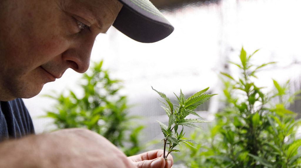 La pandemia del Covid-19 está elevando el precio de las drogas ilegales