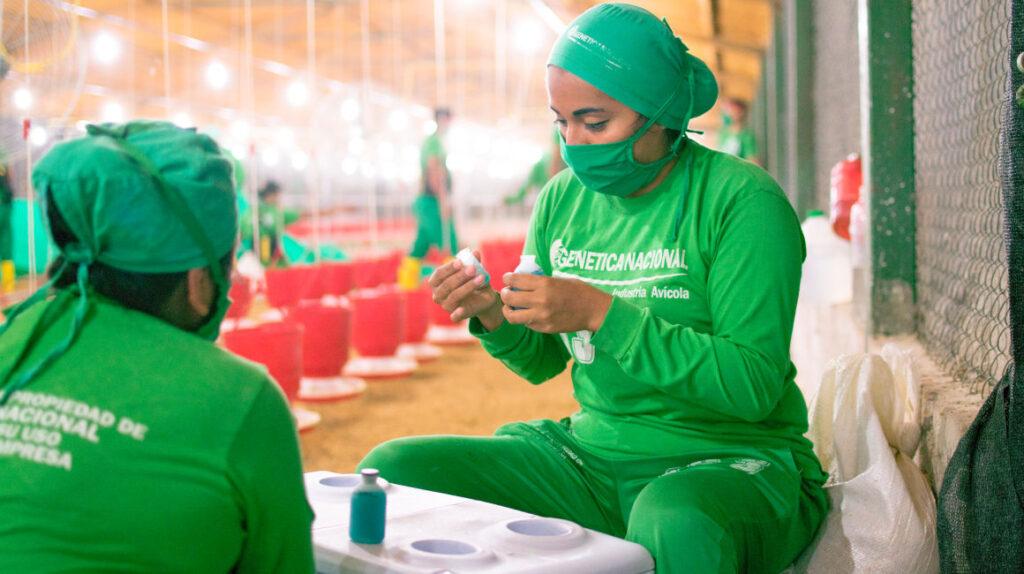 Empresa avícola de Manabí emite papel comercial por USD 1 millón