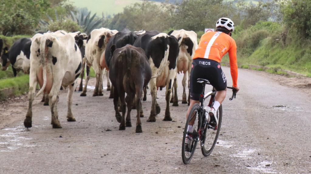 Richard Carapaz volverá a la competición en la Vuelta a Burgos en España