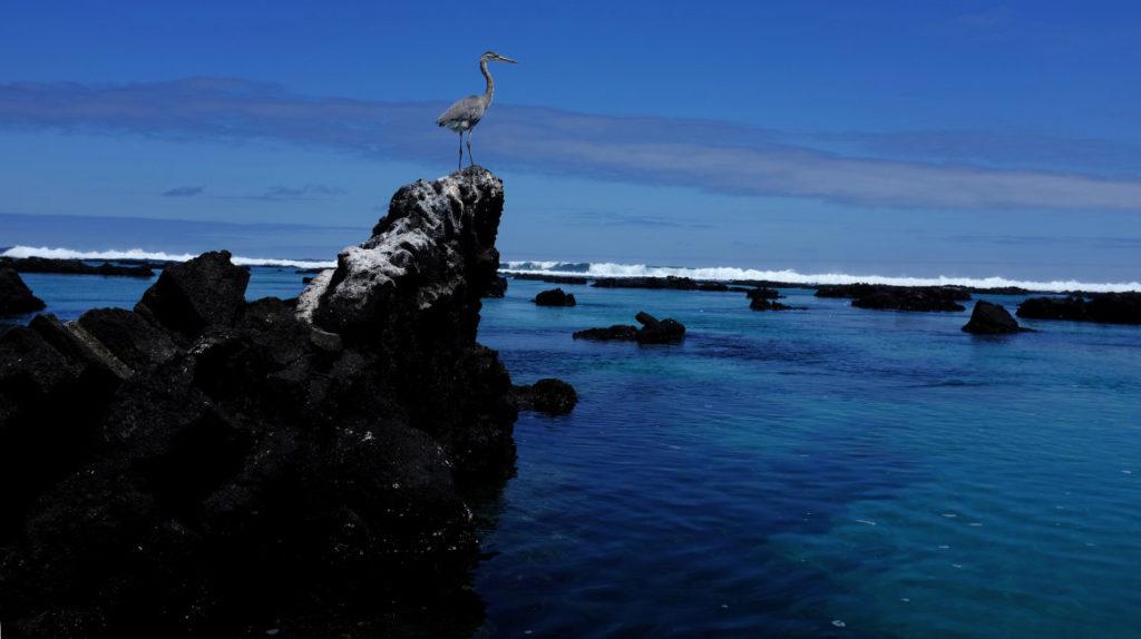 Cable submarino para Galápagos: los vacíos del anuncio presidencial