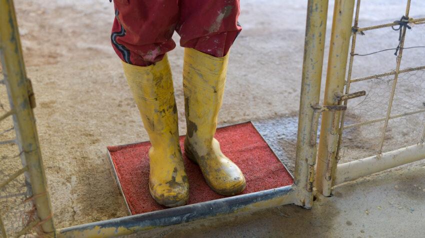 Trabajadores de una mina en Portovelo, El Oro, pasa por la desinfección de calzado, este 21 de julio de 2020.