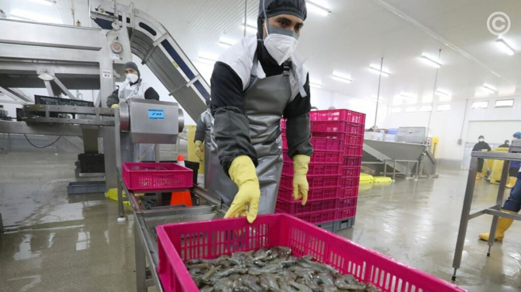 73 empresas de Ecuador autorizadas para exportar camarón a China