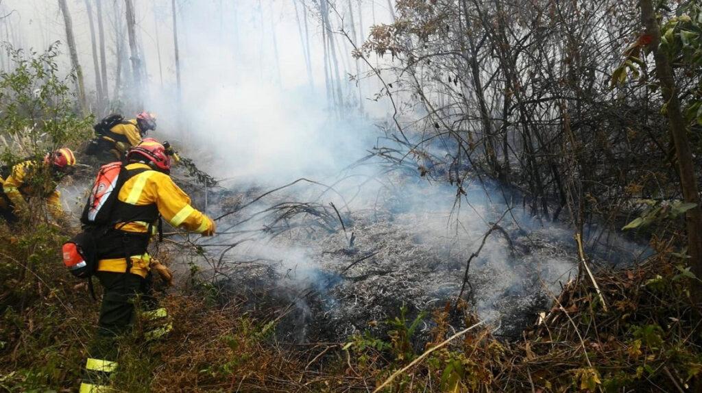 Más de 5.000 hectáreas de bosques afectadas por incendios forestales en el país