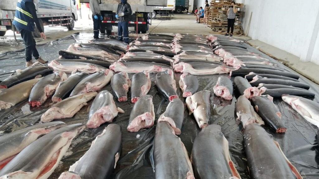 Decomisan en Perú 11 toneladas de tiburones mutilados procedentes de Ecuador