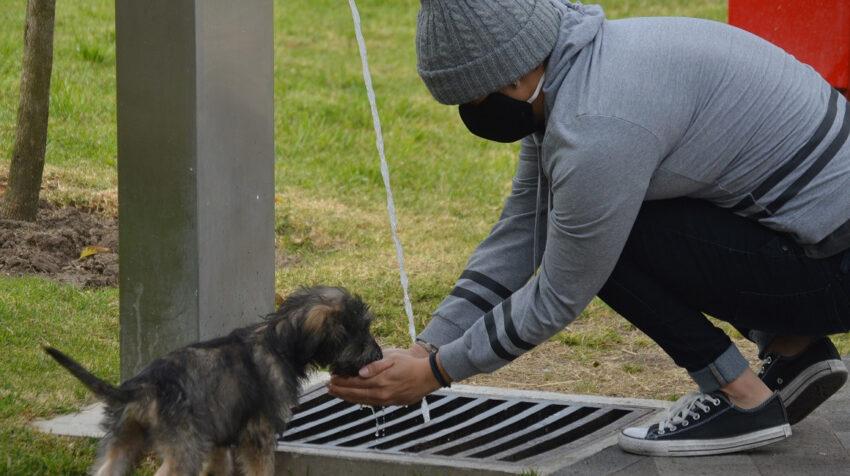 Un hombre atiende a su perro en el parque La Libertad de Cuenca, el 1 de julio de 2020.