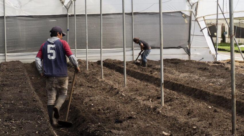 Trabajadores en una florícola en Ecuador, en septiembre de 2020.