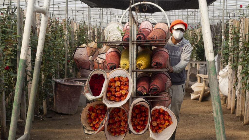 El sector florícola experimenta adquisiciones y fusiones por la crisis