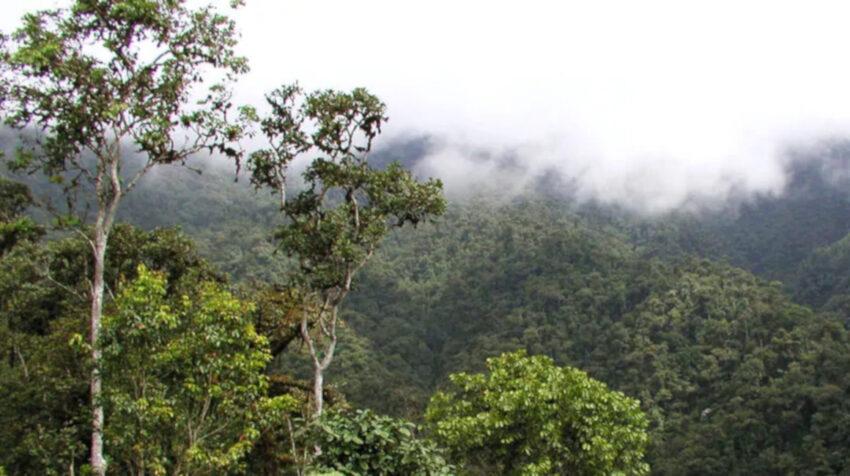 Una vista panorámica del bosque protector Los Cedros, en Imbabura, en julio de 2020.