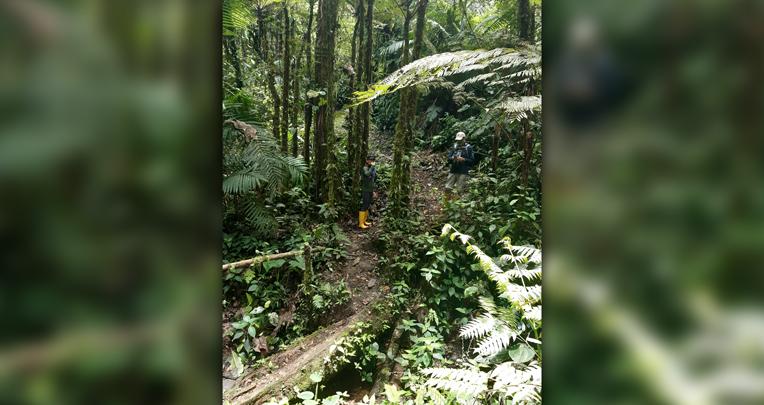 Bosque en el Chocó Andino.