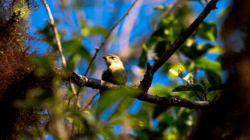 Fotografía cedida por la Fundación Charles Darwin de una especia de pájaro brujo en el archipiélago de Galápagos.
