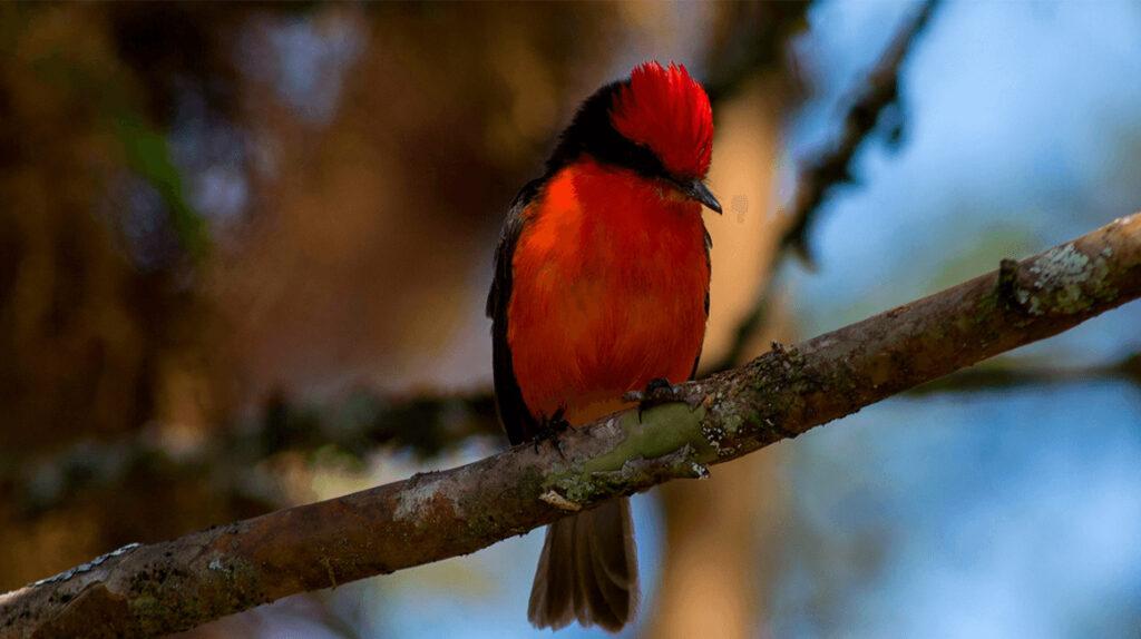 Investigadores buscan pistas del pájaro brujo de Galápagos