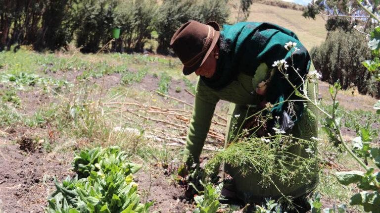 Una campesina trabaja en un campo de la Sierra norte.