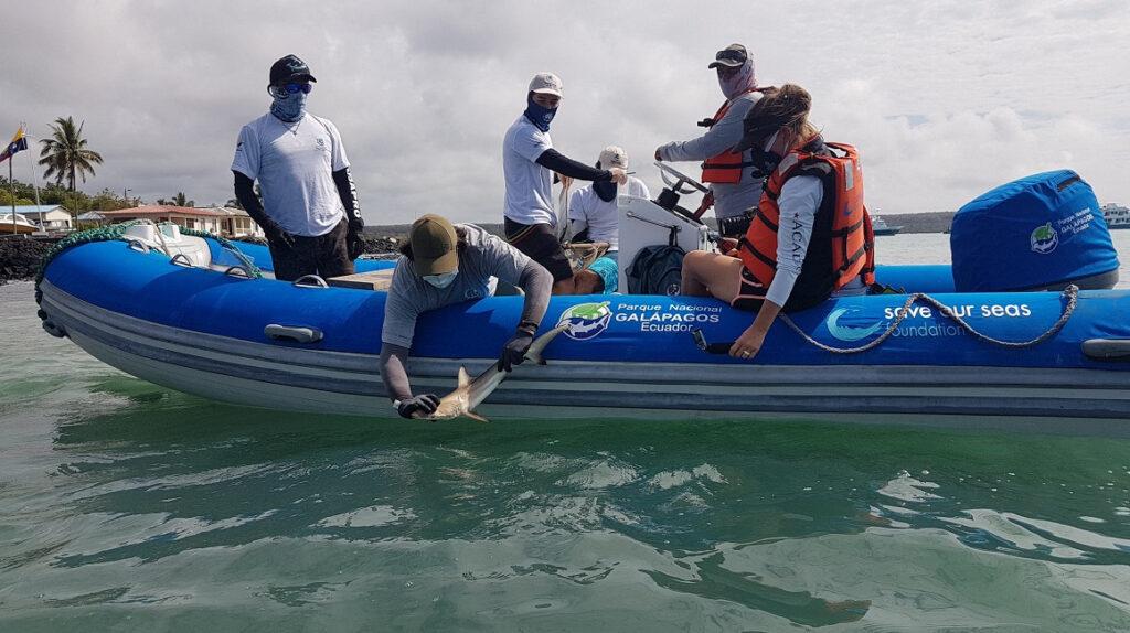 Galápagos: científicos rastrean hábitos y crías de tiburones