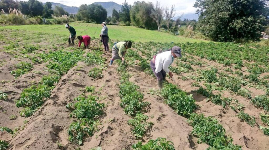 España busca a 250 agricultores ecuatorianos para trabajos temporales