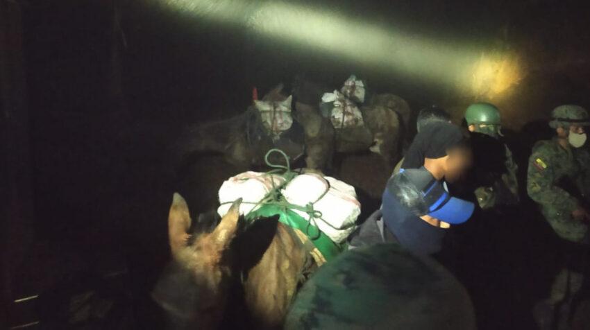 Caballos, mulas y burros son usados por mineros ilegales para transportar el material aurífero. Imagen de un operativo el 1 de febrero de 2021.