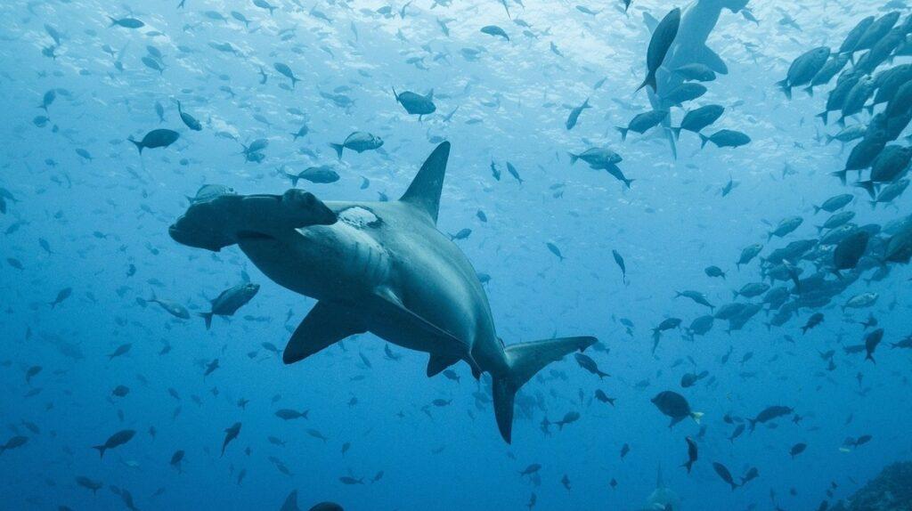 Ecuador analiza una nueva reserva marina para proteger especies migratorias