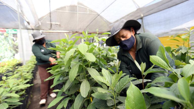 Trabajadas agrícolas durante sus actividades en Tumbaco, en Pichincha, 3 de febrero de 2021.