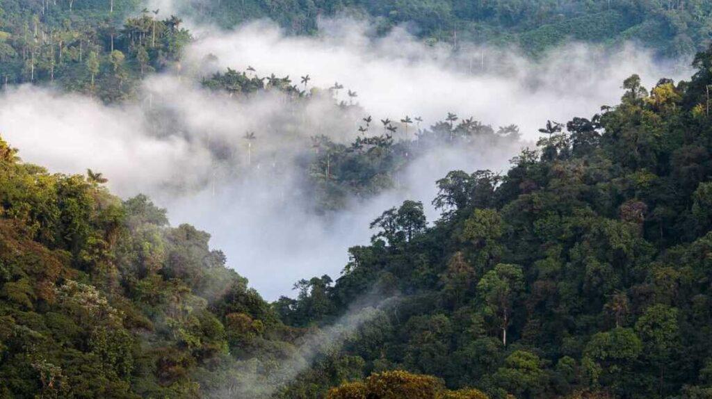 Bosques andinos captan más carbono de la atmósfera que los amazónicos