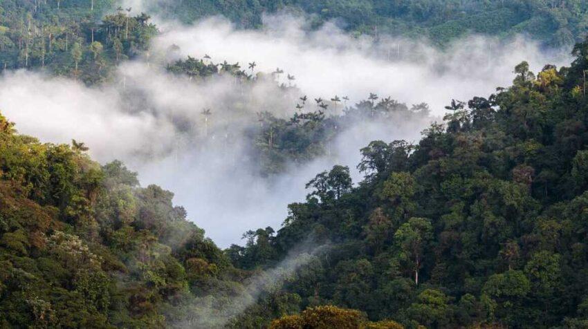 Vista panorámica del bosque andino en Ecuador.