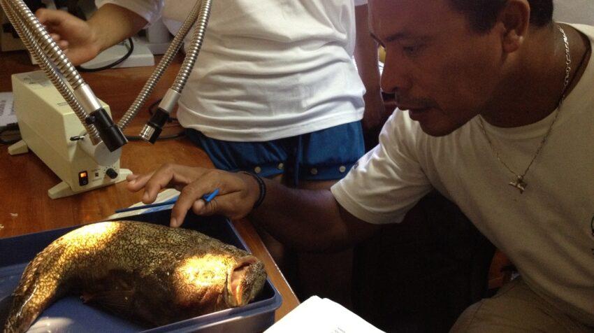 Mauricio Espinoza estudiando un pez.