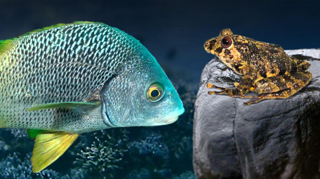 Ecuador: científicos hallan dos nuevas especies y las bautizan con singulares nombres