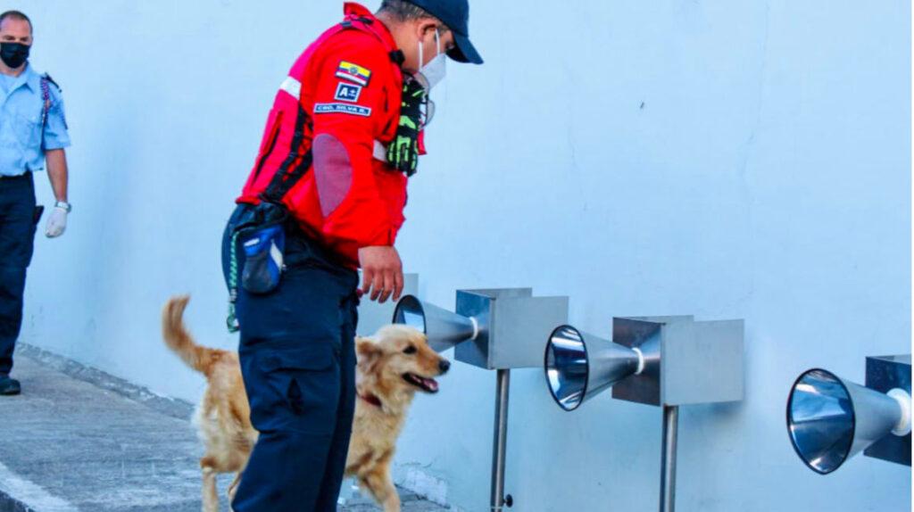 Ecuador adiestra perros para detectar Covid-19 en personas