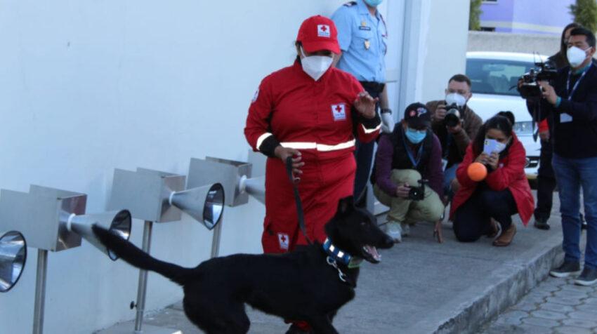 Un perro adiestrado en una demostración de detección de Covid-19, en Quito, el 2 de julio de 2021.