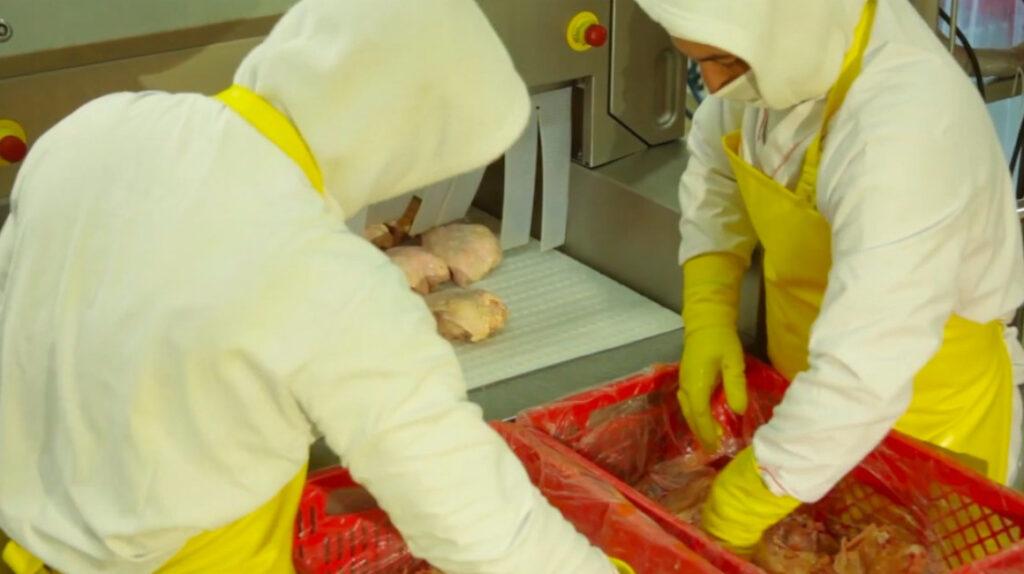 El sector avícola se alista para exportar a Centroamérica y Asia