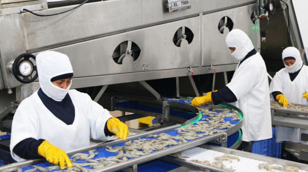 Cuatro factores mejoran el índice de producción del sector camaronero