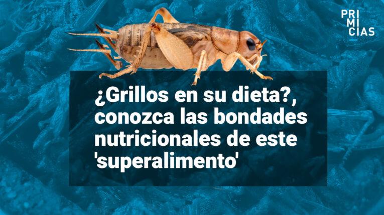 insectos son comida del futuro dice la FAO