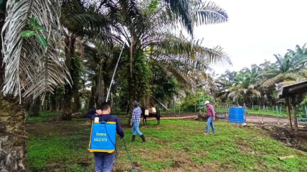 Ecuador y Colombia se unen para rescatar a la palma africana