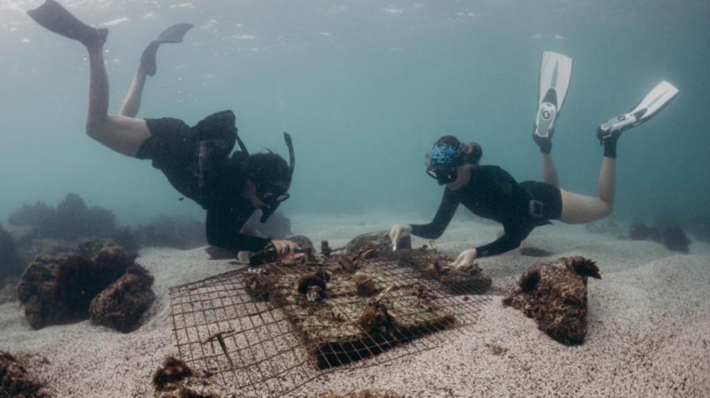 Galápagos: científicos ponen en marcha un plan para recuperar los corales