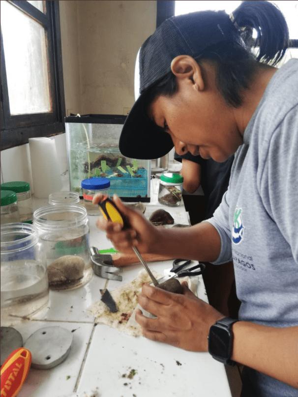 Investigadora en el laboratorio junto a los corales.