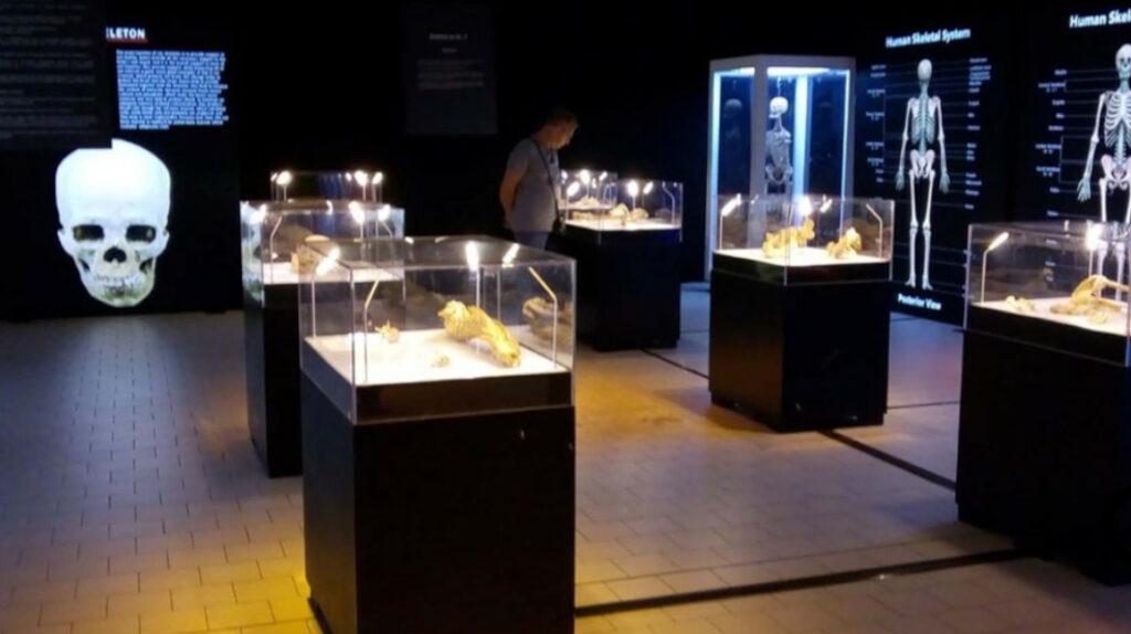 Una exposición para descubrir el cuerpo humano llega a Guayaquil